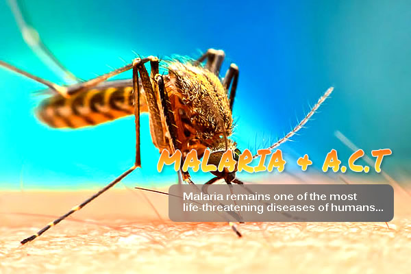 Malaria and A.C.T