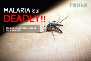 Malaria Still Deadly – An Estimate of 2019 million Malaria Cases